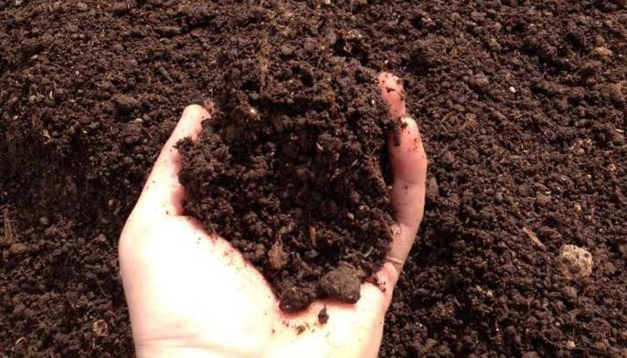 Mejor fertiliza naturalmente